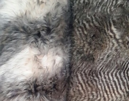 ACRYLIC/POLY TINTED FAKE FUR 15MM-50MM 58